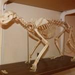 Ein Skelett eines Tieres